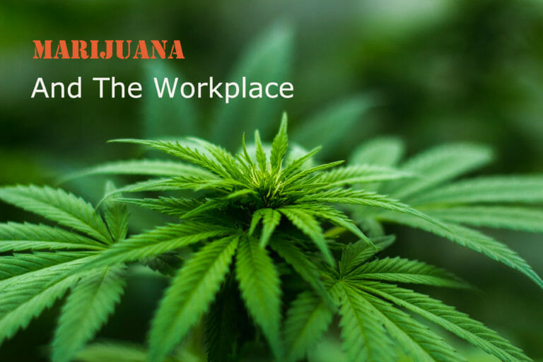 Let's Talk About Weed, Should employers within states where